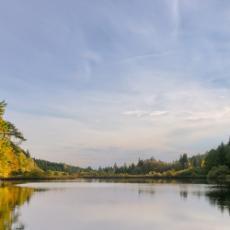 forestry01-.jpg