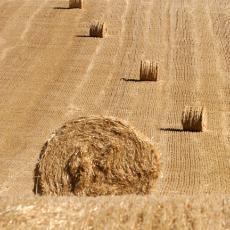 agriculture04-.jpg