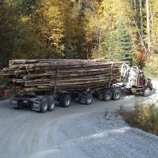 forestry02.jpg